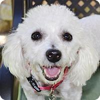 Adopt A Pet :: Dee Dee - La Costa, CA