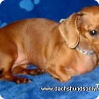 Adopt A Pet :: Tilly - Chandler, AZ