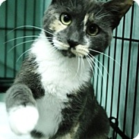 Adopt A Pet :: Cherry - Mission, BC