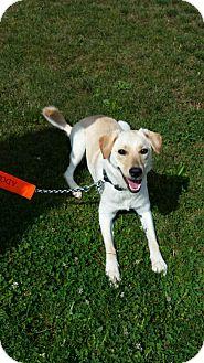 Labrador Retriever Mix Dog for adoption in Coldwater, Michigan - Nina - IN TRAINING