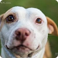 Adopt A Pet :: Tina - Southampton, PA
