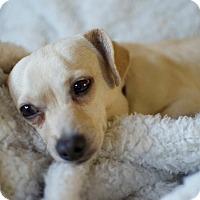 Adopt A Pet :: Hopp-Along Cassidy - Greenville, SC