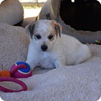 Adopt A Pet :: Cane - South Dennis, MA