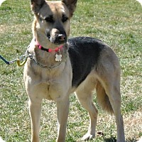 Adopt A Pet :: Khloe - Mt. Airy, MD