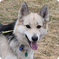 Adopt A Pet :: Thea - Lebanon, CT