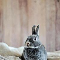 Adopt A Pet :: Iris - London, ON