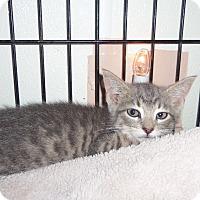 Adopt A Pet :: MONGOMERY - Medford, WI