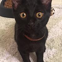 Adopt A Pet :: Marcus (& David) - Herndon, VA