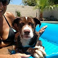 Adopt A Pet :: Mia- ADOPTION PENDING - Goodyear, AZ