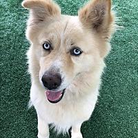 Adopt A Pet :: Diego - Chula Vista, CA