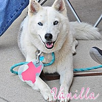 Adopt A Pet :: Vanilla--Foster Needed! - Carrollton, TX