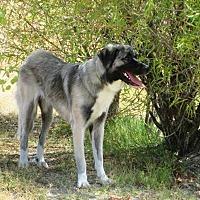 Adopt A Pet :: Eevee - Pleasant Grove, CA