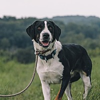 Adopt A Pet :: Sevati - Nashville, TN