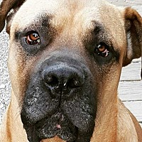 Adopt A Pet :: Scout - LaGrange, OH