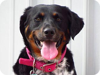 Australian Kelpie/Cattle Dog Mix Dog for adoption in Meridian, Idaho - Daisy