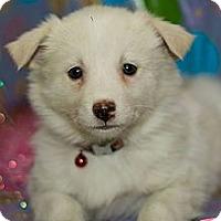Adopt A Pet :: Blizzard - Saskatoon, SK