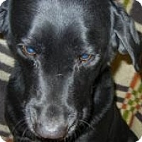 Adopt A Pet :: Shadow - ADOPTION PENDING!! - Antioch, IL