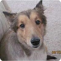 Adopt A Pet :: Sage - apache junction, AZ