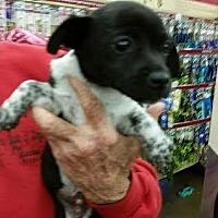 Adopt A Pet :: Manny - Fresno, CA
