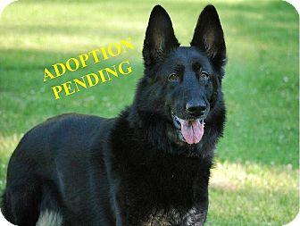 German Shepherd Dog Mix Dog for adoption in Winnipeg, Manitoba - SHADOH