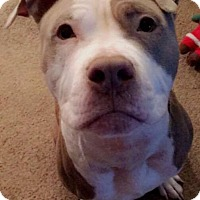 Adopt A Pet :: Troy - New Canaan, CT