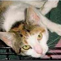 Adopt A Pet :: Calypso - Pasadena, CA