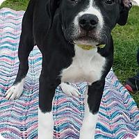 Adopt A Pet :: Caroline-Adopted! - Detroit, MI