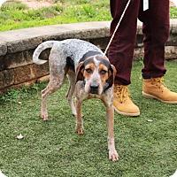 Adopt A Pet :: Daisy - Greensboro, NC