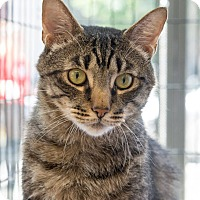 Adopt A Pet :: Keats - New York, NY