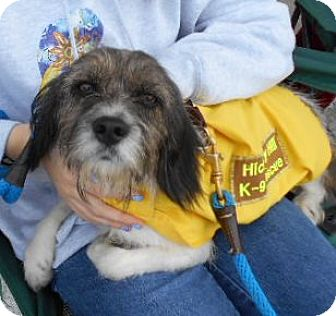 Terrier (Unknown Type, Medium) Mix Dog for adoption in Ashland, Virginia - Wrigley-ADOPTED!!!