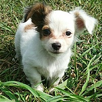 Adopt A Pet :: I'M ADOPTED Star's