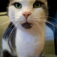 Adopt A Pet :: Tobi (Merritt Island Adoption Center) - Cocoa, FL