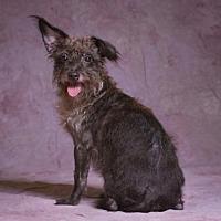 Adopt A Pet :: Gretchen - League City, TX