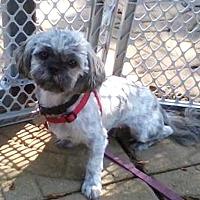 Adopt A Pet :: Lucy - Jacksonville, FL
