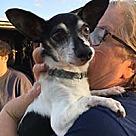 Adopt A Pet :: Max T
