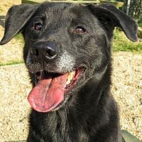 Adopt A Pet :: Kylo Ren - West Babylon, NY
