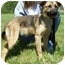 Photo 3 - German Shepherd Dog Mix Puppy for adoption in North Judson, Indiana - Bo