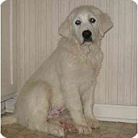 Adopt A Pet :: Rex - Chandler, IN