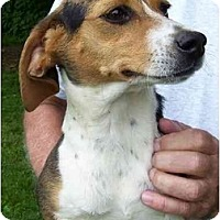 Adopt A Pet :: Lady 2 - Indianapolis, IN