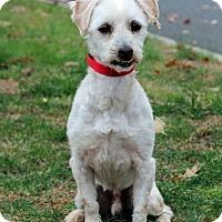 Adopt A Pet :: Jiff - Port Washington, NY