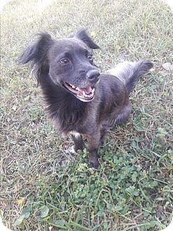 Chihuahua/Terrier (Unknown Type, Small) Mix Dog for adoption in New Port Richey, Florida - Leila