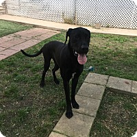 Adopt A Pet :: Mike - San Antonio, TX