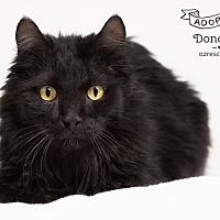 Adopt A Pet :: Donovan - Phoenix, AZ