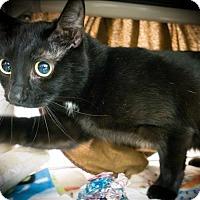 Adopt A Pet :: Baloo - Sherwood, OR