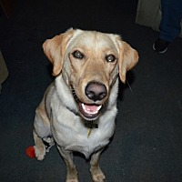 Adopt A Pet :: Marley - Deer Park, NY