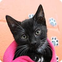 Adopt A Pet :: Darius - Sarasota, FL