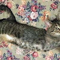 Adopt A Pet :: Mulan - Park Falls, WI