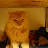 Adopt A Pet :: Charlie - Bridgeton, MO