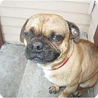 Adopt A Pet :: Tallahassee - Inglewood, CA