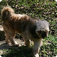 Adopt A Pet :: Benji - Cantonment, FL